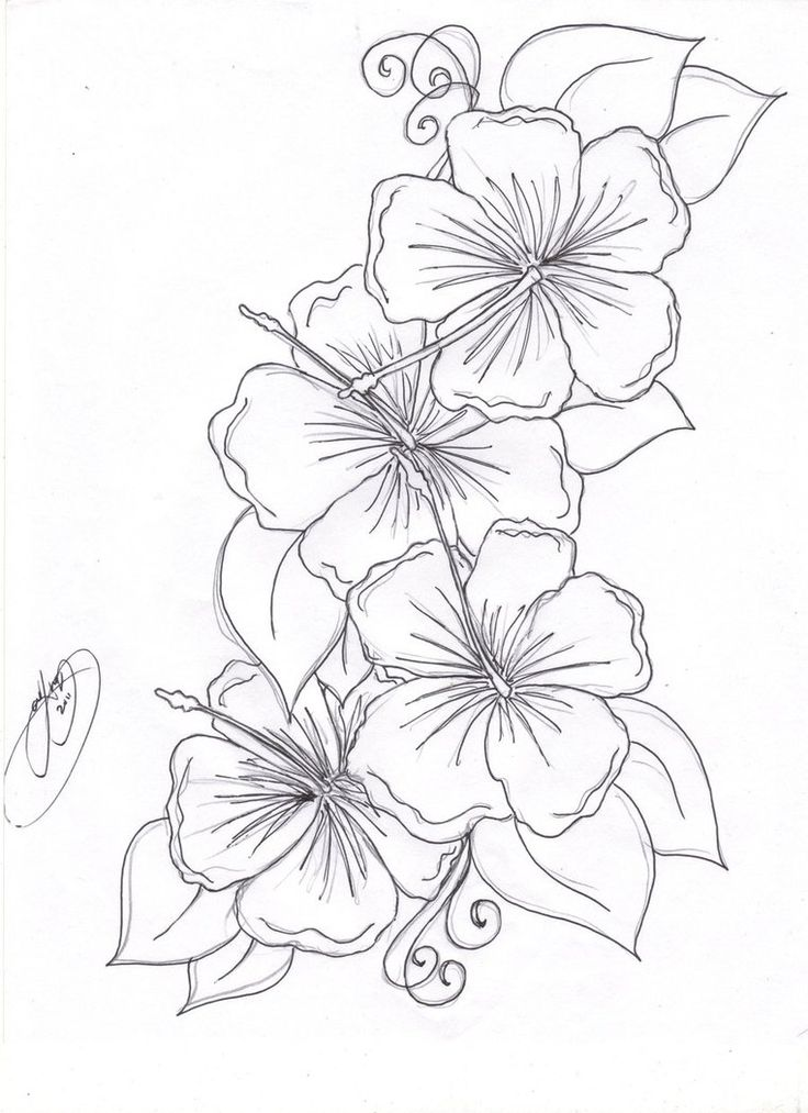 736x1013 Flower Drawings For Tattoos Elaxsir