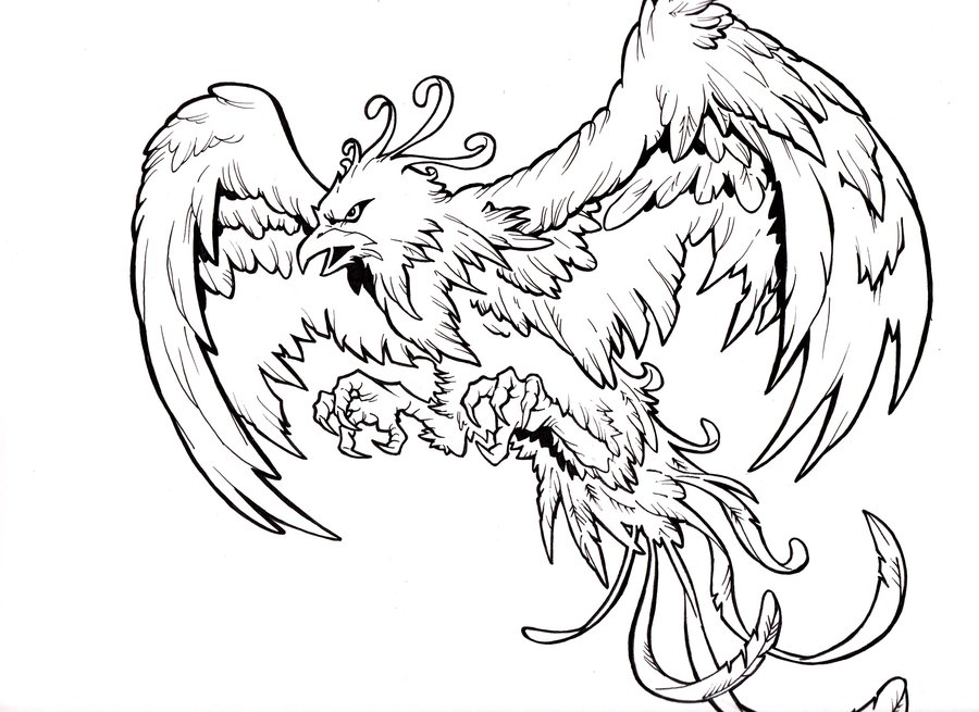900x655 Phoenix Tattoo Drawing Flash In 2017 Real Photo, Pictures, Images