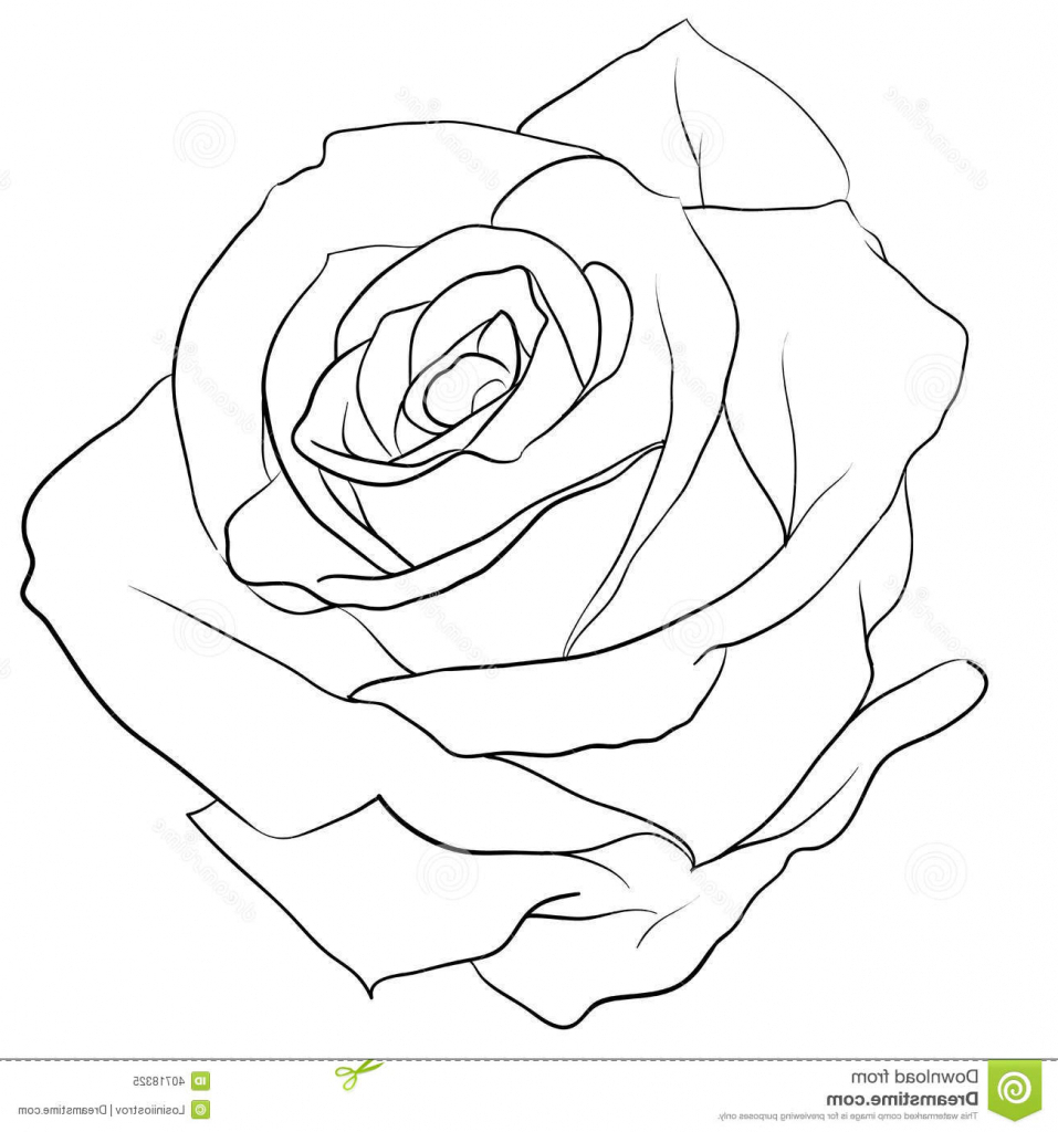 Simple Rose Tattoo Outline: Tattoo Drawing Rose At GetDrawings