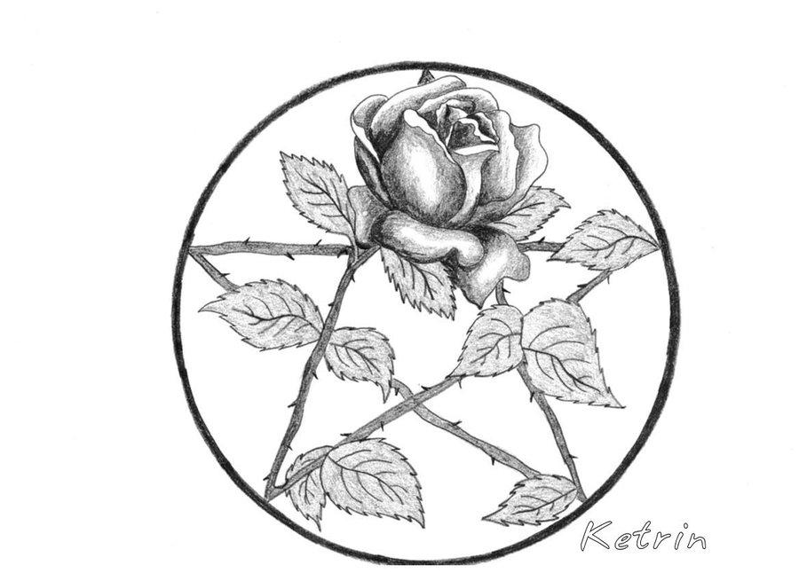 900x655 Pentacle Rose By Allcinna