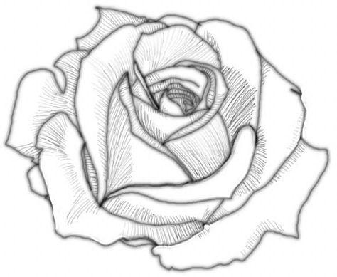 474x389 Shading Partir De Rose 1 Drawing Drawings