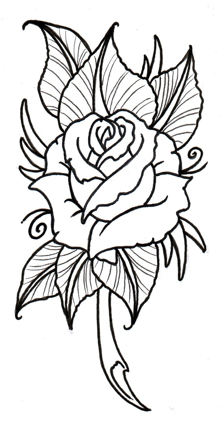 736x1397 Traditional Rose Drawing Best Rose Outline Ideas