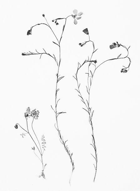 448x611 Drawn Wildflower Simple