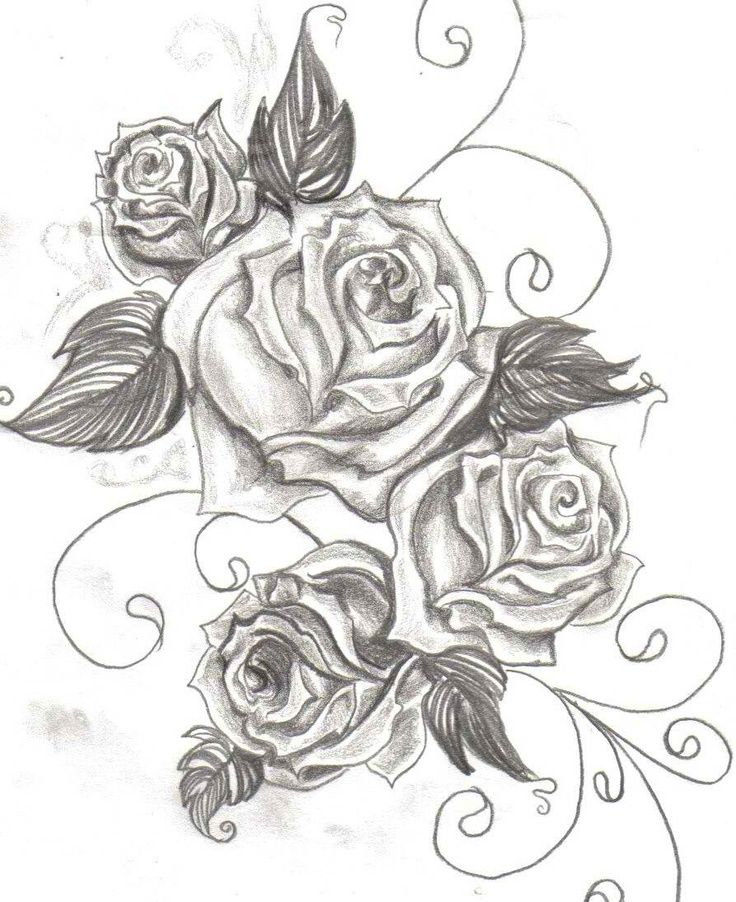 736x902 Download Rose Tattoo Drawing