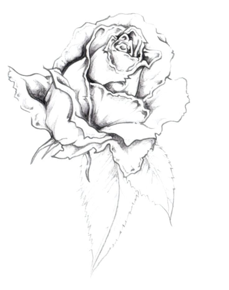 736x934 Free Tattoo Sketches Best Tattoo Design Drawings Free Tattoo