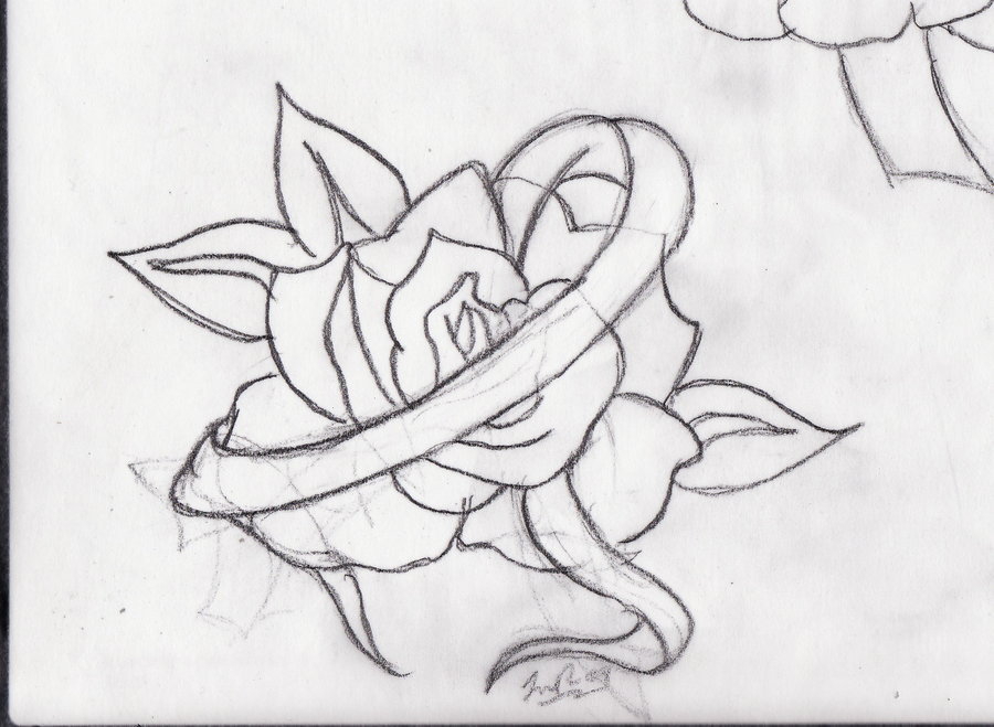 900x659 Rose And Ribbon Tattoos Drawing In 2017 Real Photo, Pictures