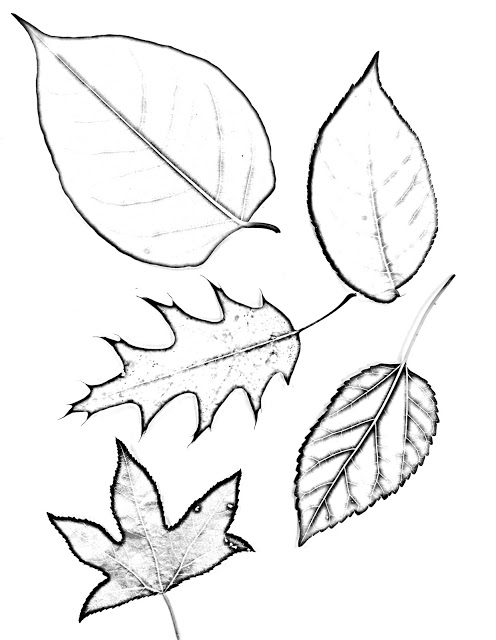 496x640 The Helpful Art Teacher Drawing Magnified Leaves Finding The Details