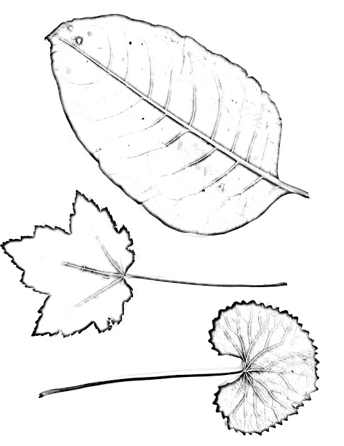 494x640 The Helpful Art Teacher Drawing Magnified Leaves Finding The Details