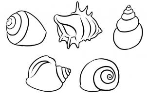 302x202 How To Draw Shells Step 5 Awesome Art Lessons