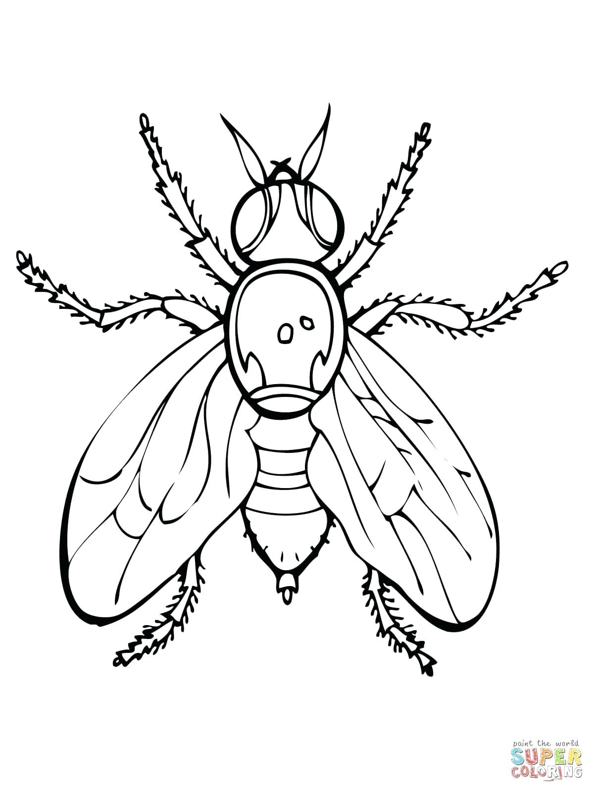 1200x1600 Coloring Television Coloring Page Click The Fruit Fly Pages Set