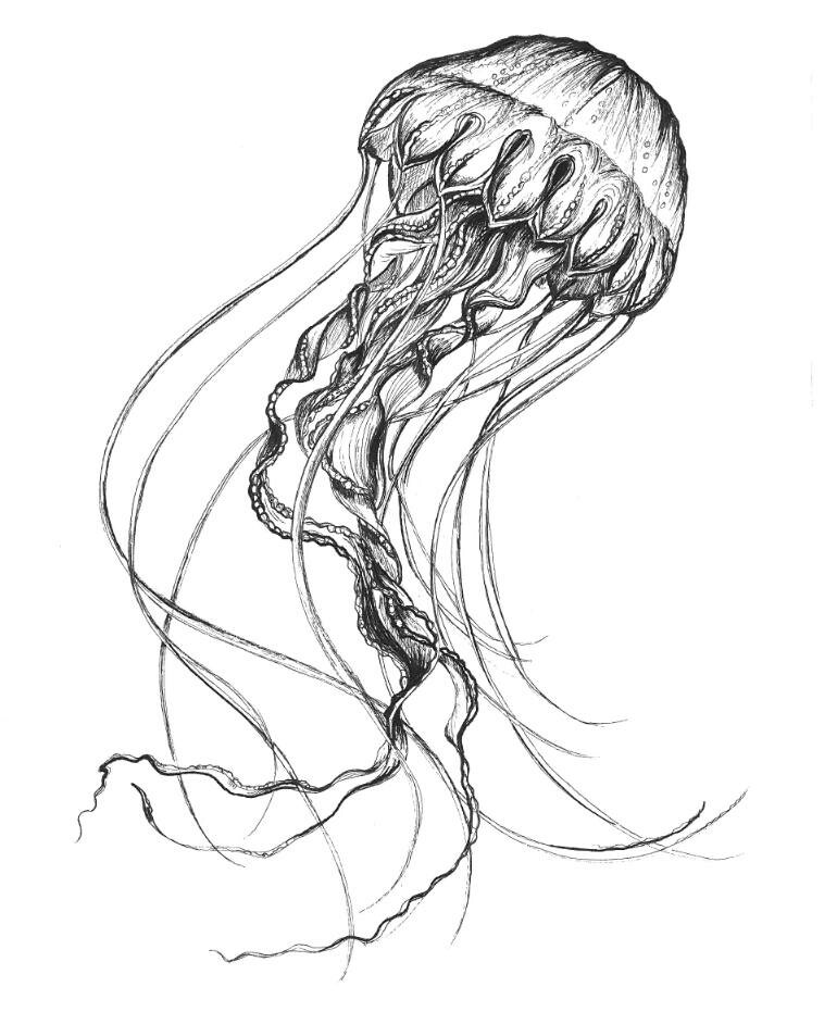 770x931 Jellyfish Drawing Tattoos Jellyfish Drawing