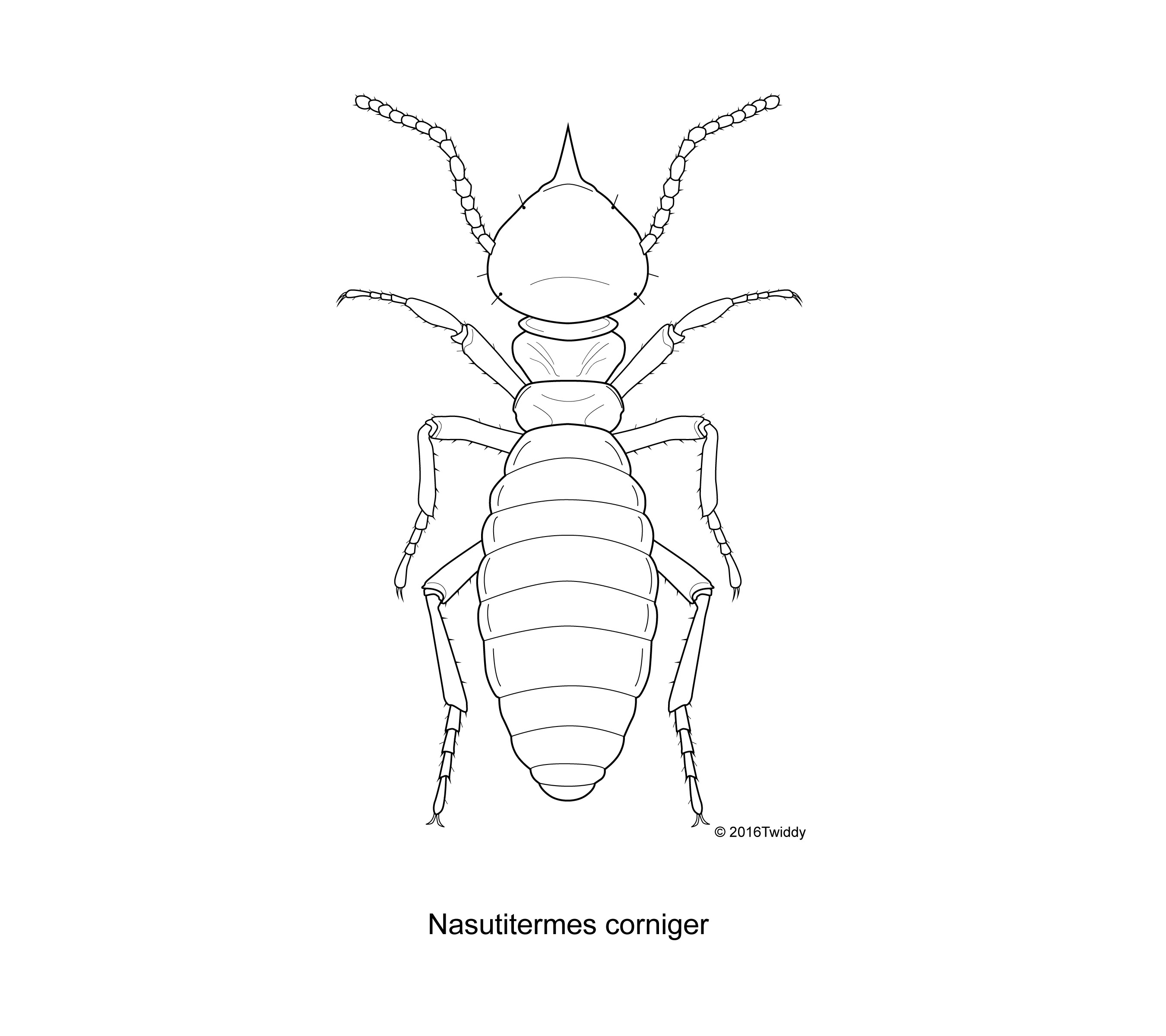 Termite Drawing at GetDrawings.com | Free for personal use Termite ...