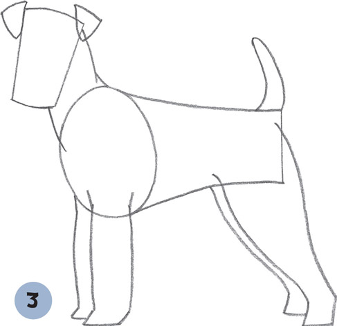 Terrier Drawing