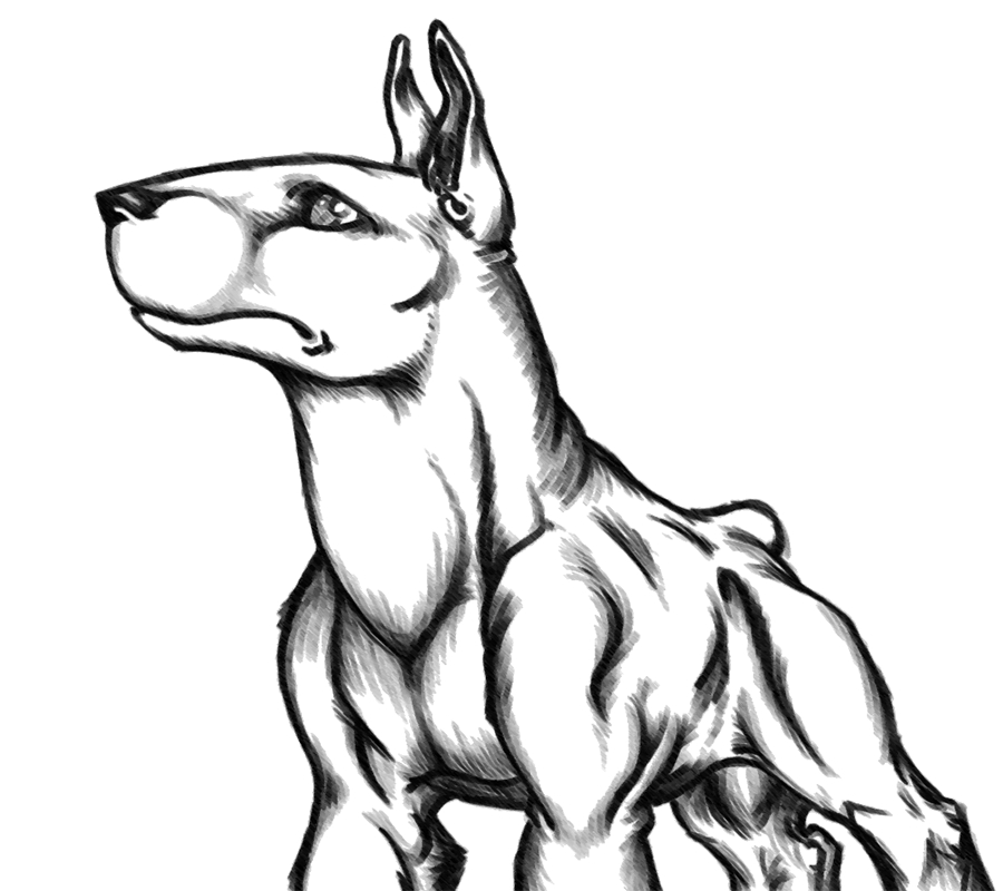900x800 Bull Terrier Doodle By Da Vos