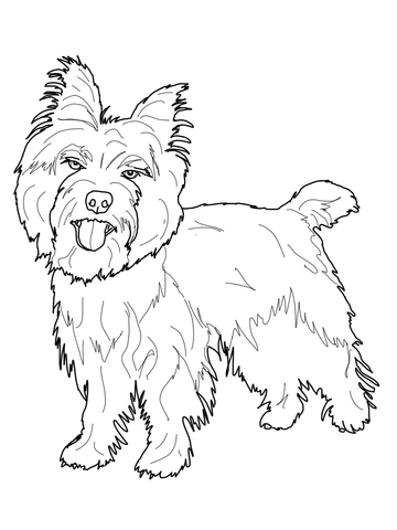 360x480 Cairn Terrier Coloring Page Free Printable Coloring Pages