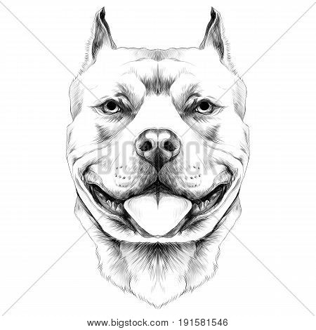 450x470 Dog Breeds American Pit Bull Vector Amp Photo Bigstock