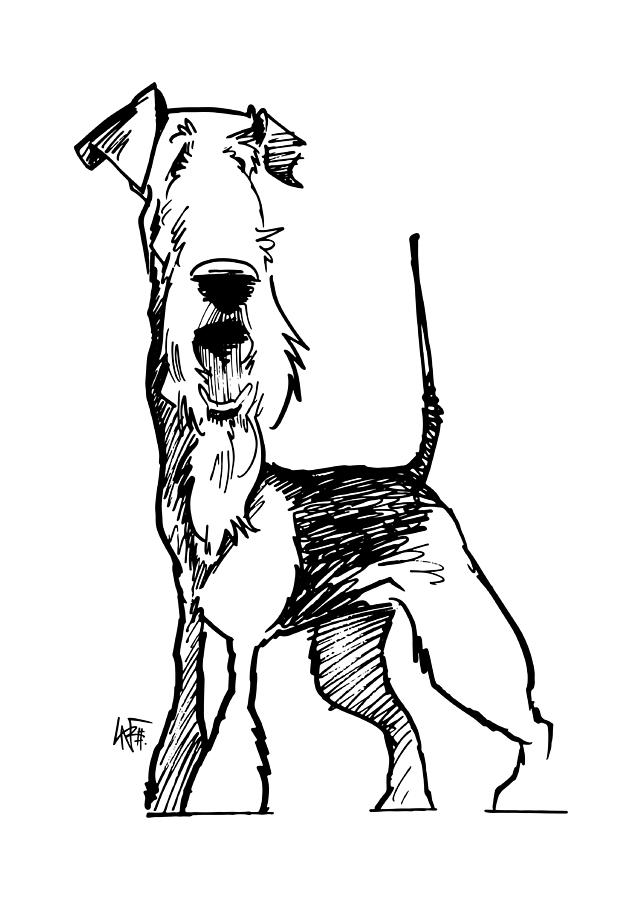 642x900 Airedale Terrier Gesture Sketch Drawing By John Lafree