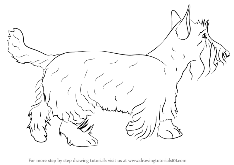 800x566 Learn How To Draw A Scottie Dog (Dogs) Step By Step Drawing