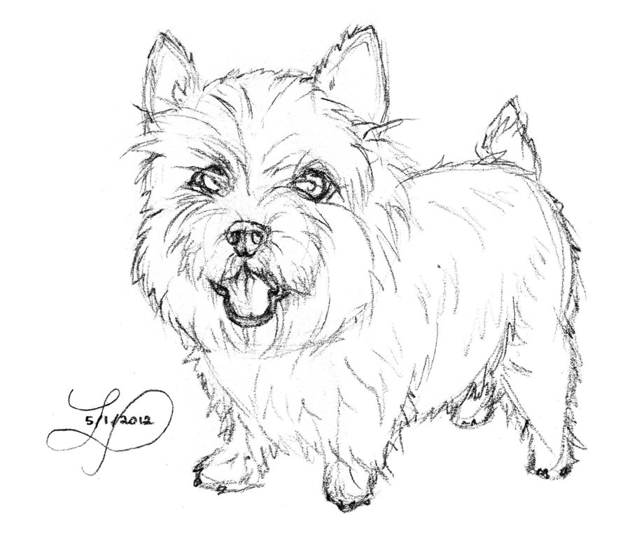 900x761 Norwich Terrier By Suberidai