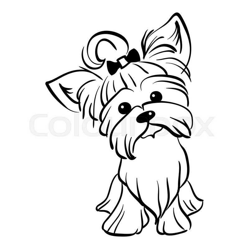 800x800 Sketch Funny Dog Yorkshire Terrier Breed Sitting Hand Drawing