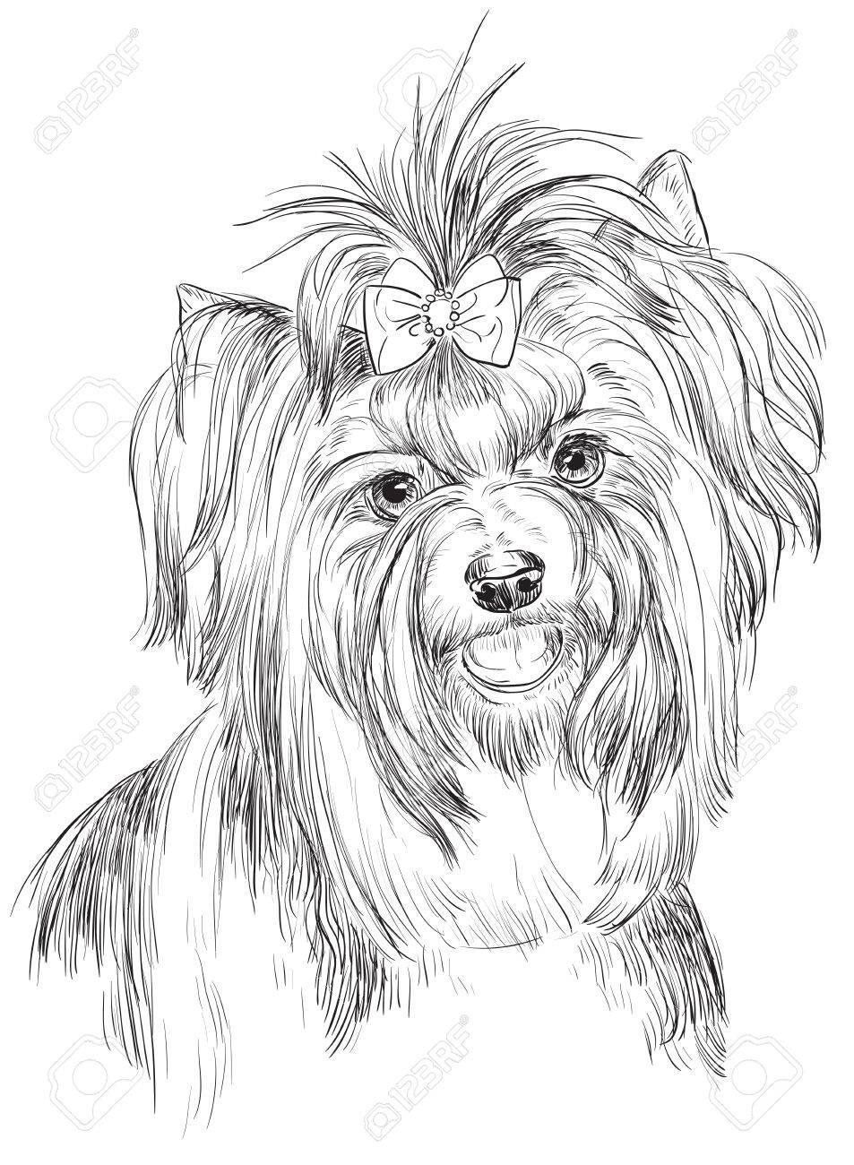 953x1300 Vector Outline Portrait Of Biewer Terrier (Yorkshire Terrier