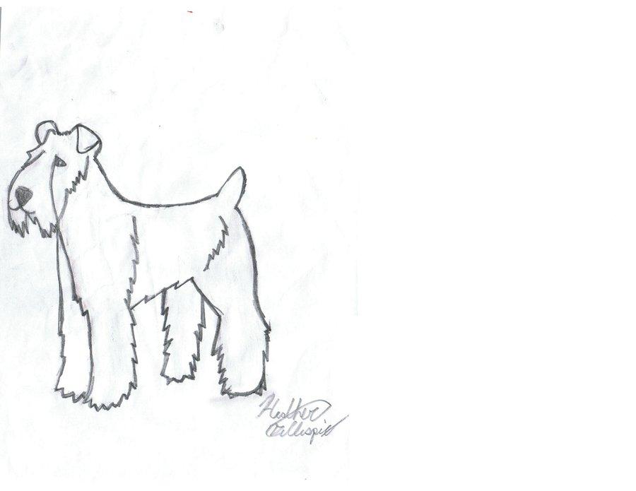 900x695 Wheaten Terrier By Xox Doglover Xox