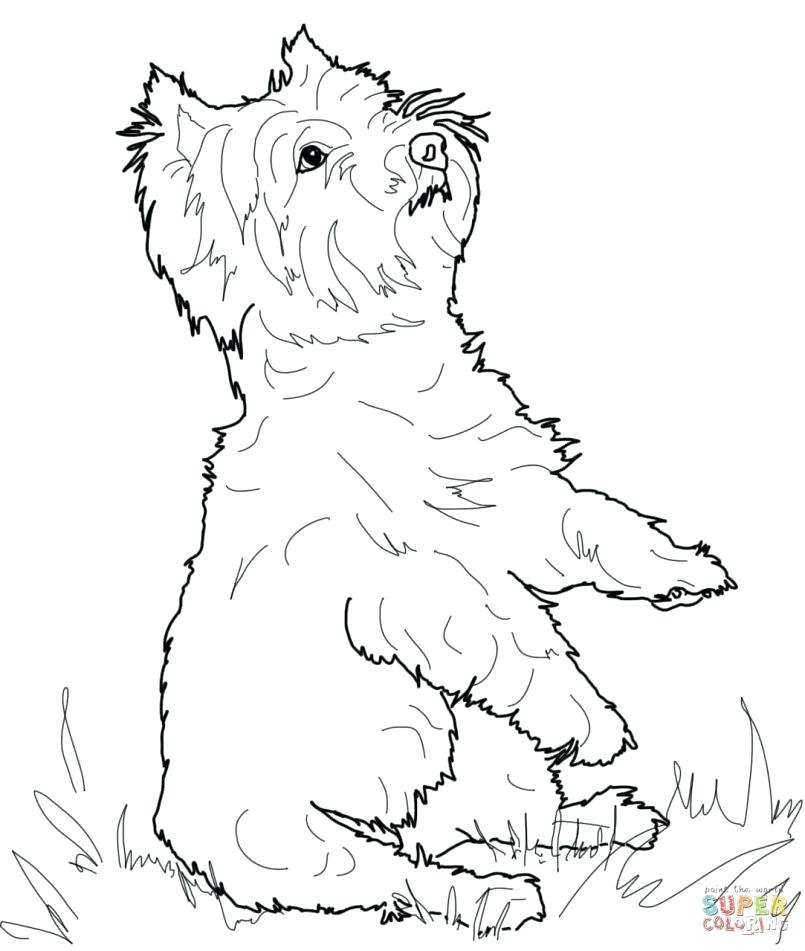 805x951 Boston Terrier Coloring Page