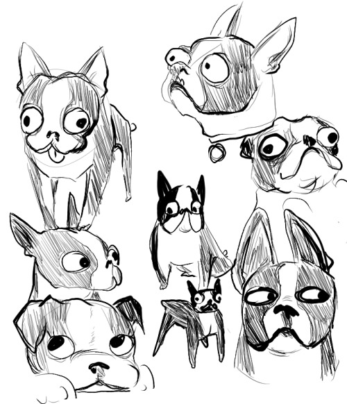 500x582 Boston Terrier Drawing Tumblr