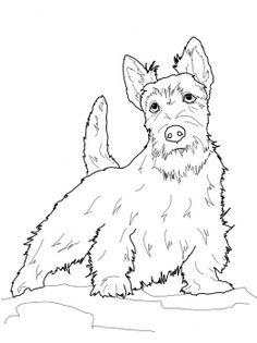 236x315 How To Draw A Scottie Dog Scottie Mania! Dog