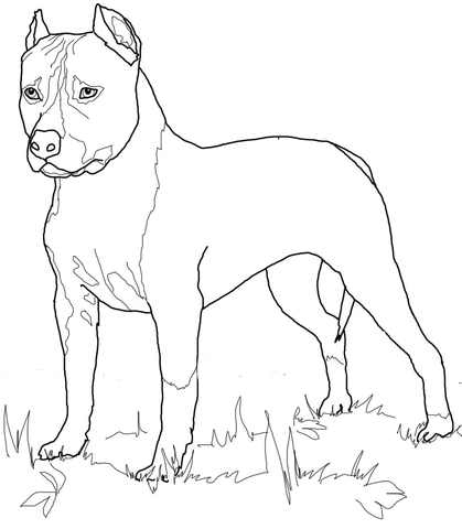 419x480 American Staffordshire Terrier Coloring Page Free Printable