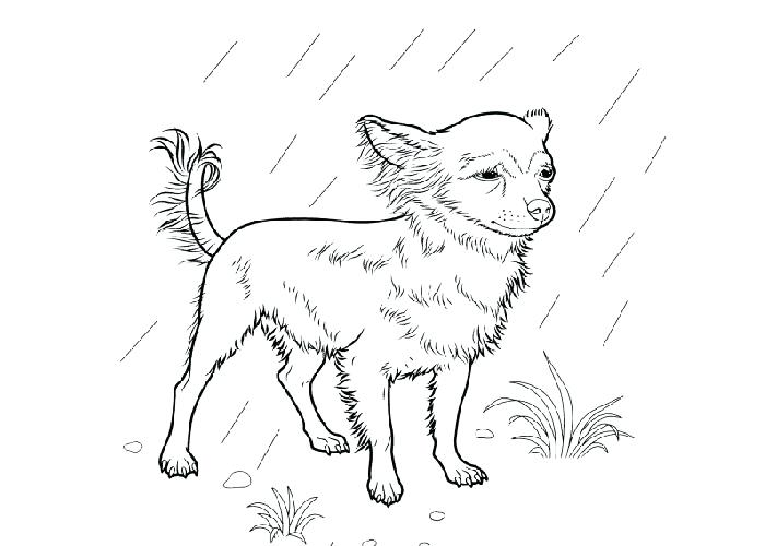 700x500 Boston Terrier Coloring Page Together With Terrier Dog Coloring