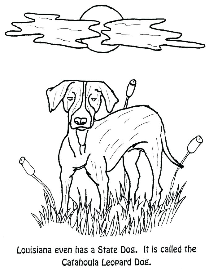 675x874 Texas Symbols Coloring Pages State Symbols Coloring Pages State