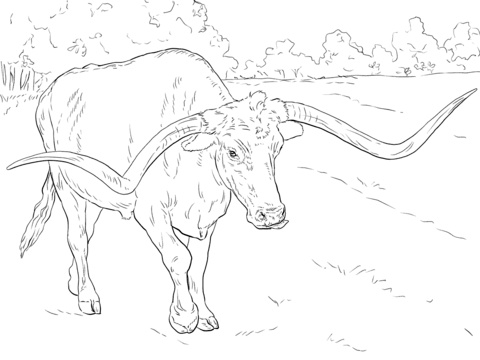 480x360 Realistic Texas Longhorn Coloring Page Free Printable Coloring Pages