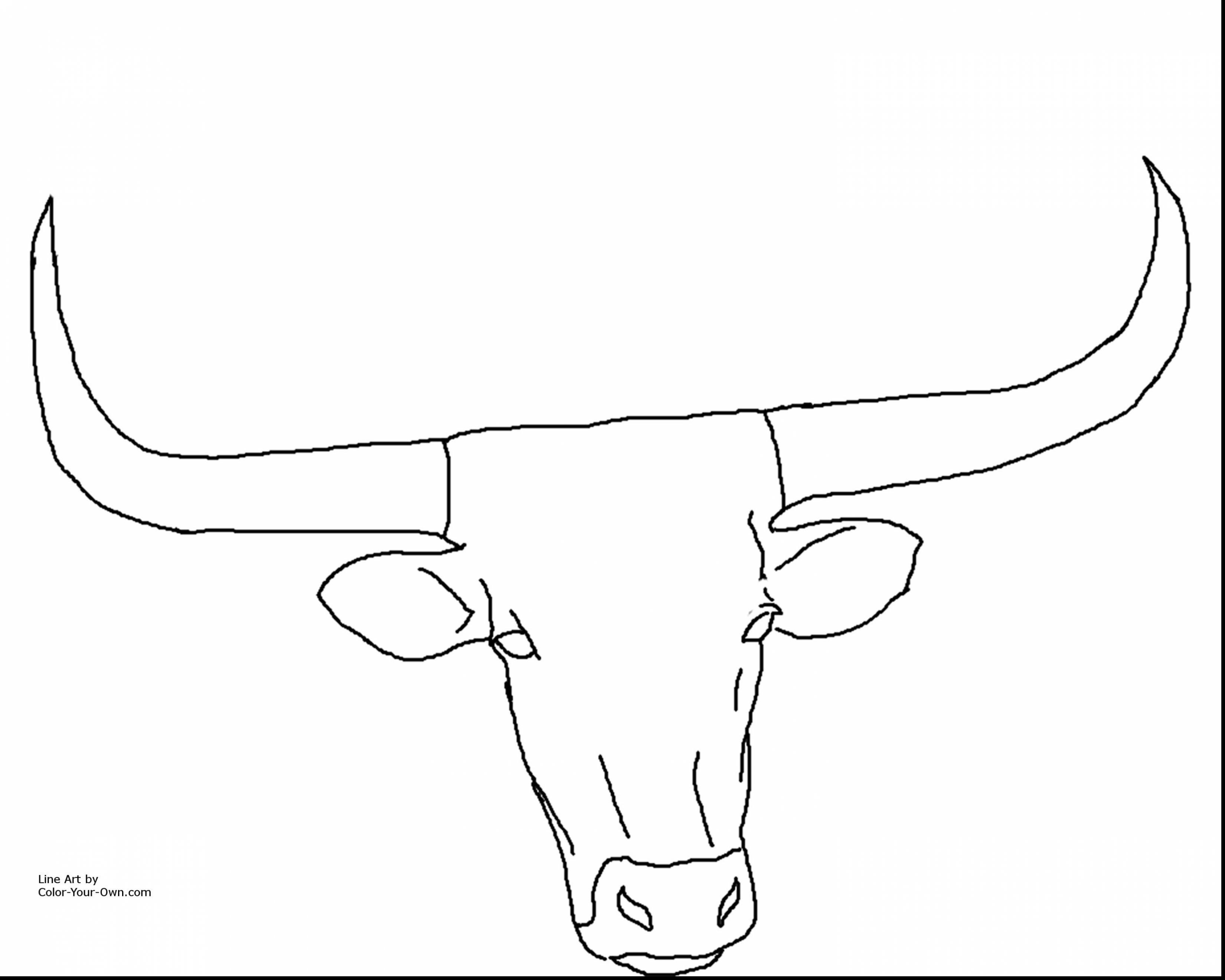 3300x2640 Terrific Texas Longhorn Cows Coloring Pages With Texas Coloring