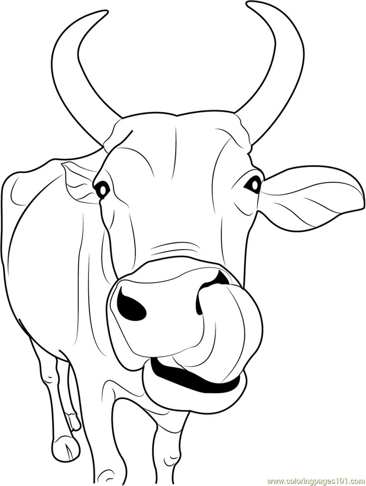 736x977 Cattle Coloring Pages