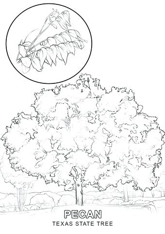 340x480 Lovely Texas State Symbols Coloring Pages Kids Tree Page Free