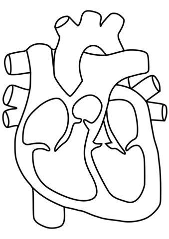 339x480 Human Heart Coloring Page Free Printable Coloring Pages