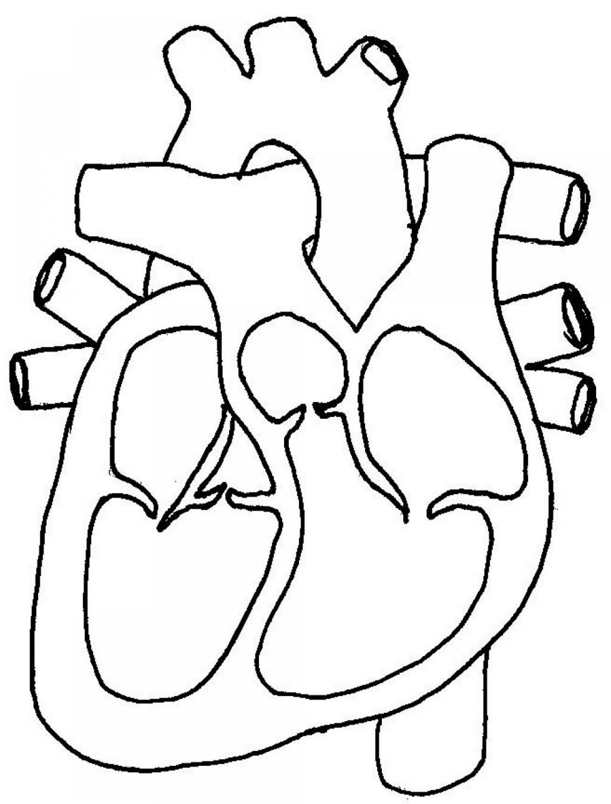 1200x1579 Printable Diagrams Of The Human Heart Diagram Site