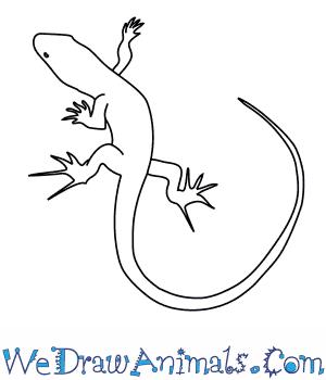 300x350 How To Draw A Bedriaga's Rock Lizard
