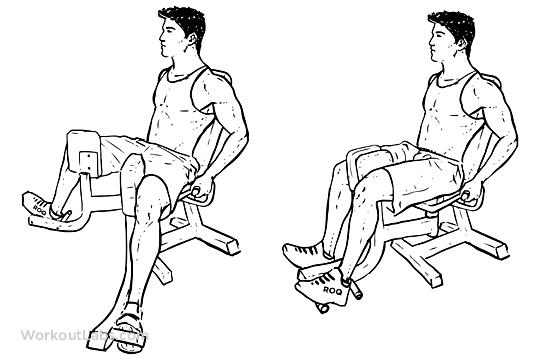 Thigh Drawing