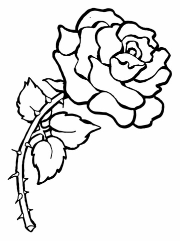 360x480 Rose With Thorns Coloring Page Free Printable Coloring Pages
