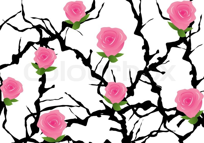 800x563 Vector Blackthorn Bush With Roses Stock Vector Colourbox