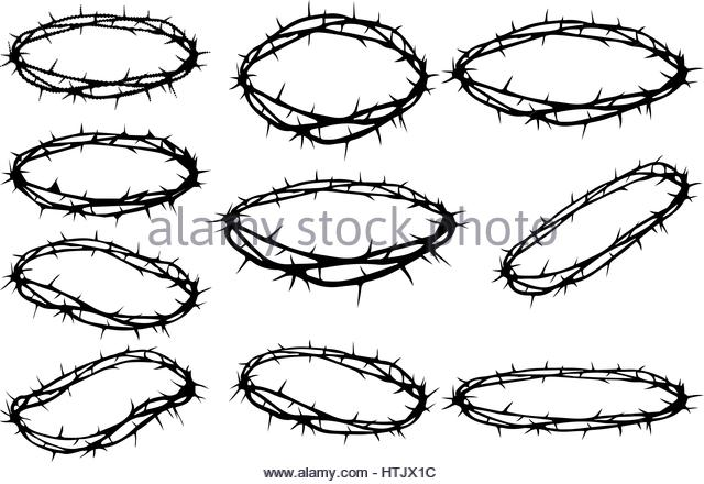 640x440 Christs Thorn Stock Photos Amp Christs Thorn Stock Images