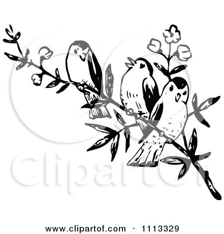 450x470 Three Vintage Black And White Birds On A Branch Posters, Art