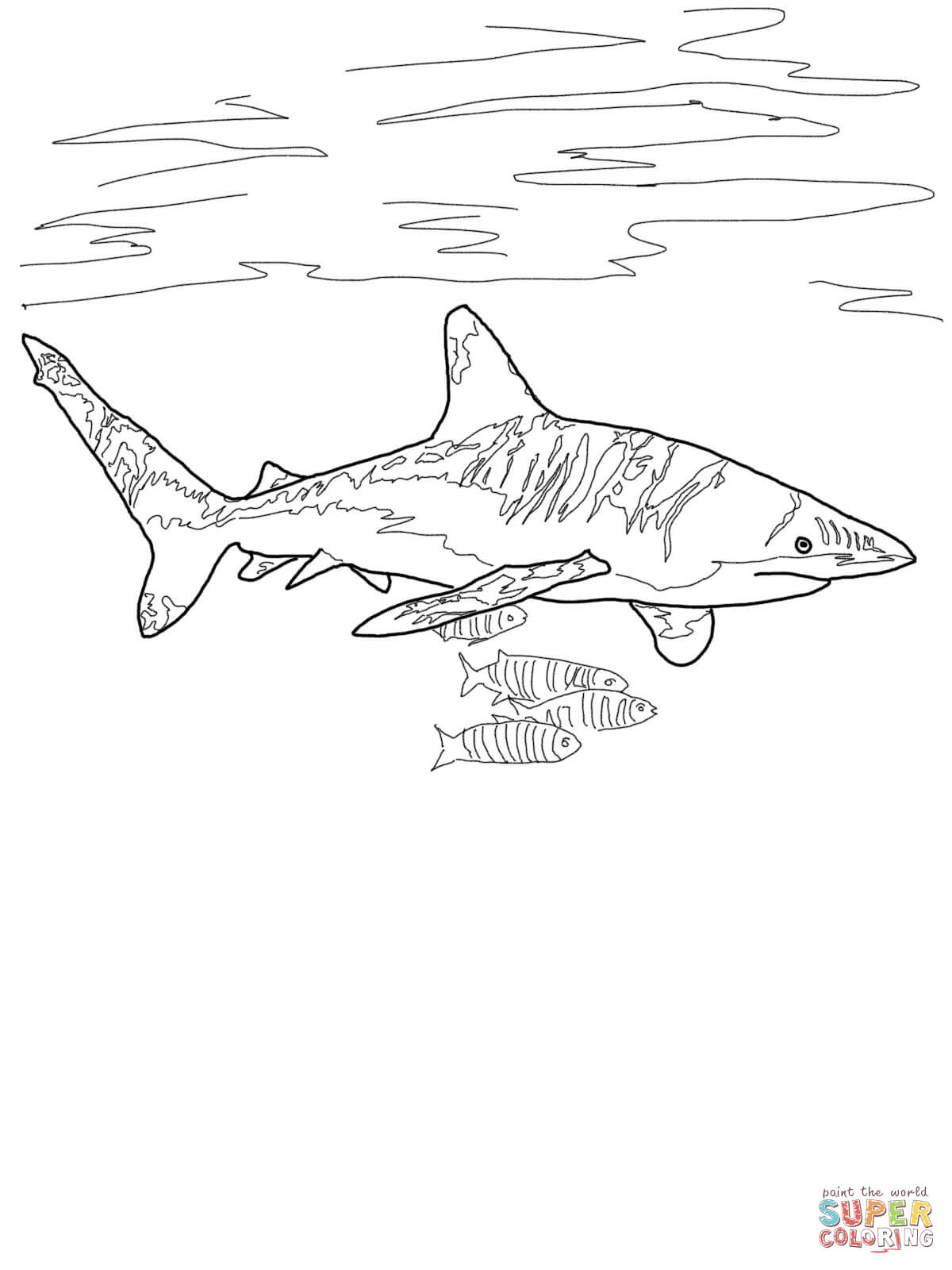Thresher Shark Drawing at GetDrawings