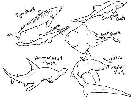 440x330 Hammerhead Shark Coloring Page Thresher Shark 4 Hammerhead Shark