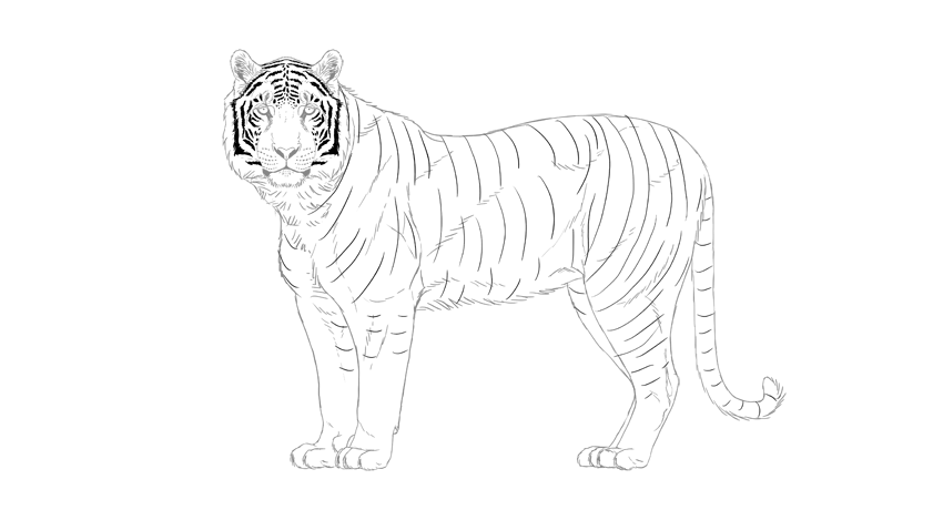 850x460 How To Draw A Tiger