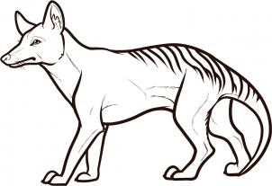 302x207 How To Draw How To Draw A Tasmanian Tiger, Tasmanian Wolf