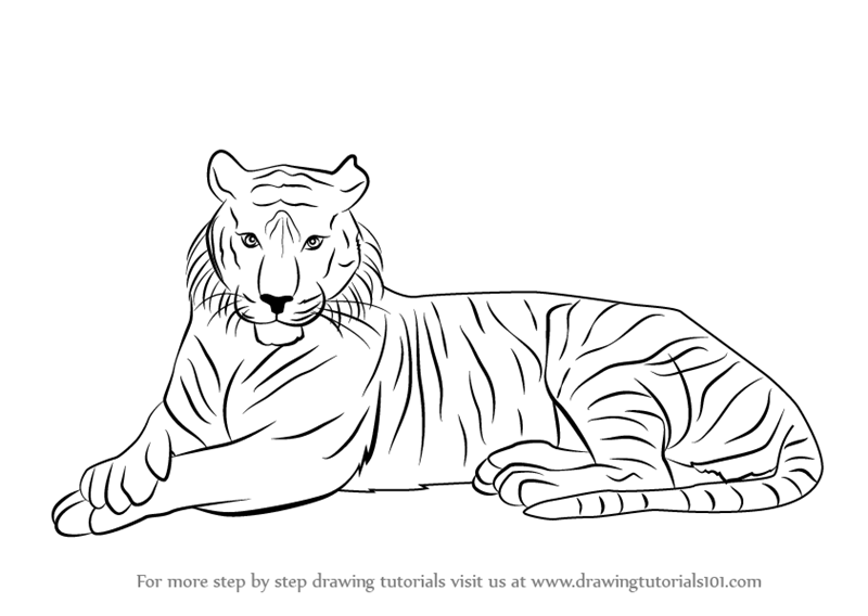 800x568 Learn How To Draw A Bengal Tiger (Wild Animals) Step By Step