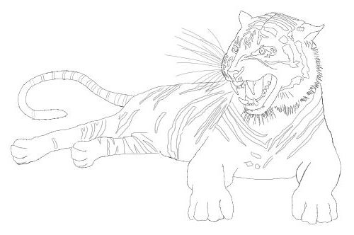 500x332 Tiger Drawing Free Drawing Lessons.